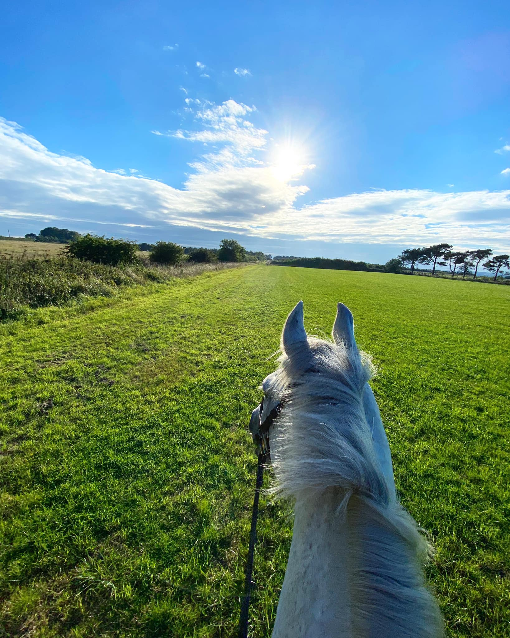 September Round Up - Team Tunnah Equestrian