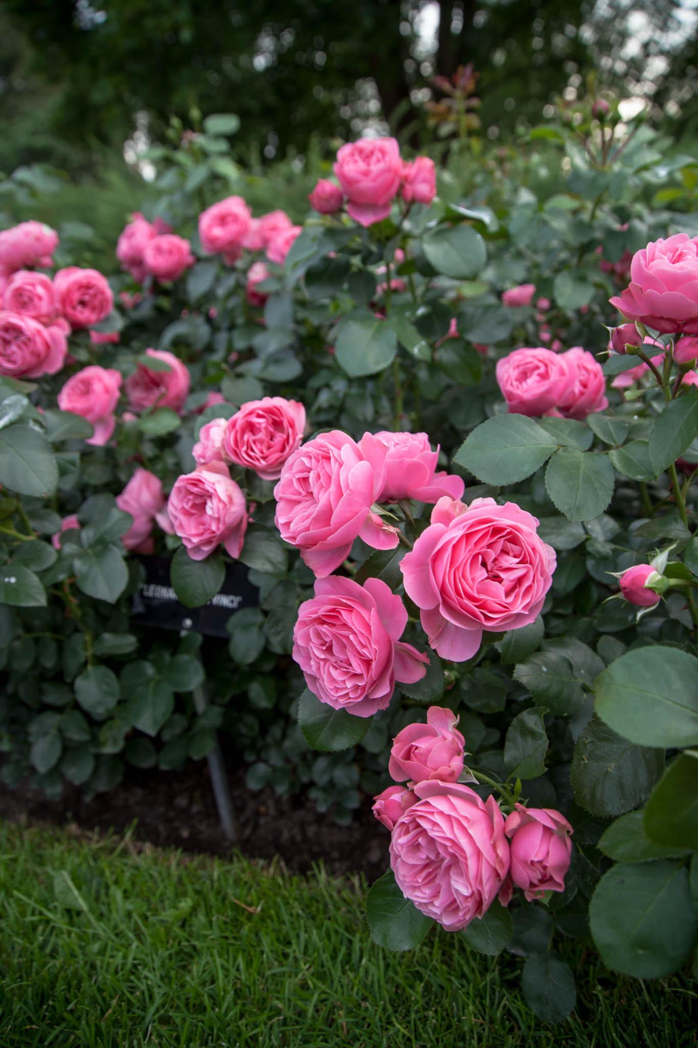ruusuja arboretum tampere