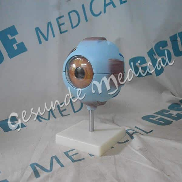 agen torso bola mata manusia