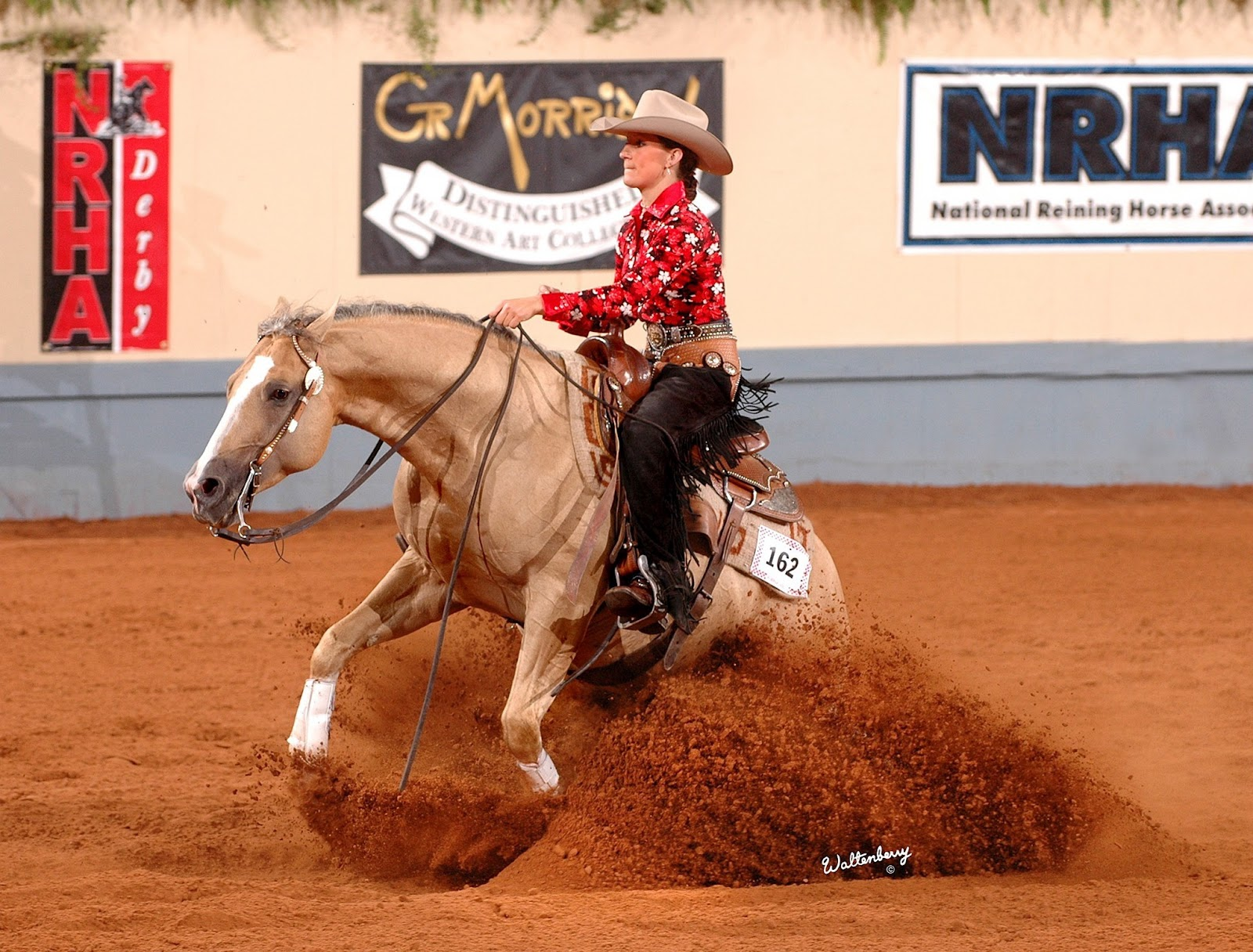 Reining Pictures 43