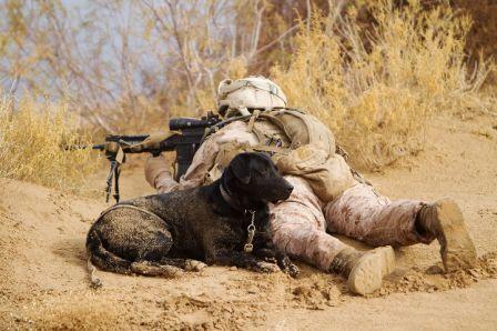 Tentara Dan Penolong Setia