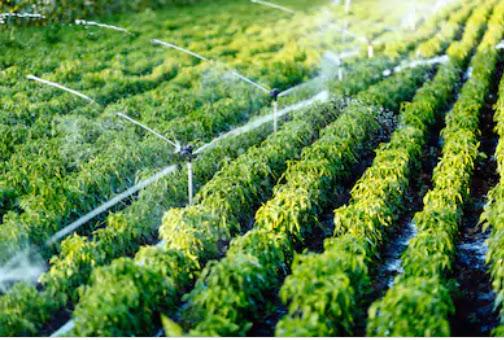 Ide berikutnya untuk Mendapatkan Penghasilan Pasif - Memiliki Usaha Pertanian Anda Sendiri