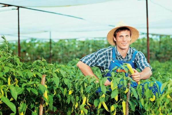 Έρευνα φοιτήτριας του ΑΠΘ αποκαλύπτει την ταυτότητα του επιχειρηματία στον αγροτικό χώρο