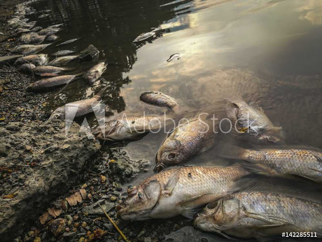 Water Pollution: Effects and side effects