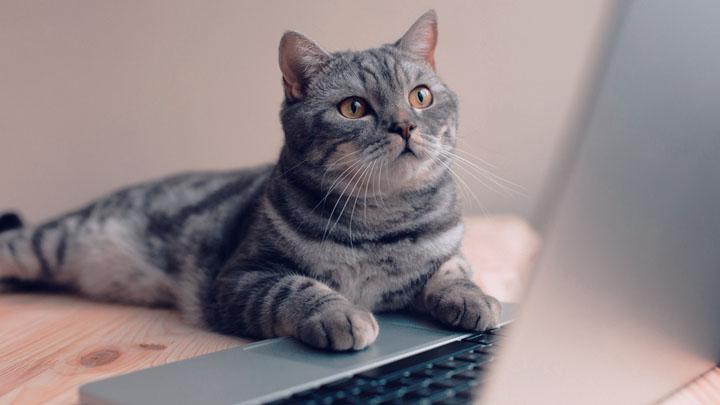 cat-behaviors-explained