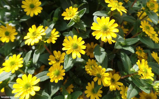 Foto gele bloemen