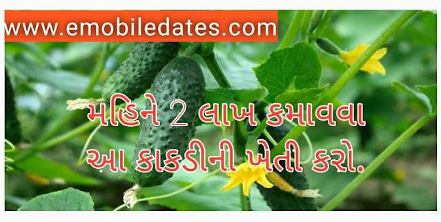 Gujarat Fermar Benifit news 2021