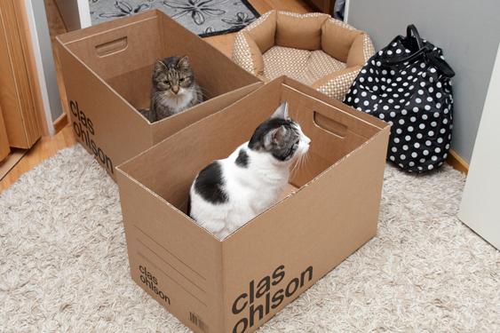 Kissan tutkimiskäyttäytyminen