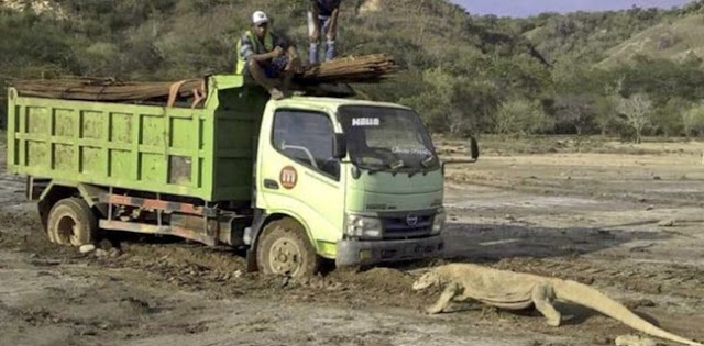 Siang Ini, Kementerian LHK Akan Digeruduk Massa Tolak Kapitalisasi Taman Nasional Komodo