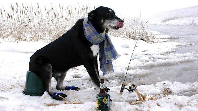 Верный пес протащил своего хозяина за веревку 5 километров, чтобы он не замерз