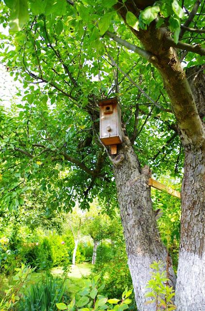 budka dla ptaków na drzewie