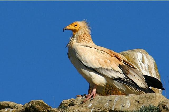Ecoturismo Avistamiento de aves en Guadalajara