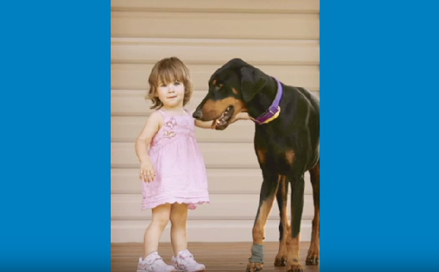 This Newly Adopted Dog Bites and Throw Away a 17-Month-Old Baby to Save Her From This Venomous Snake! Family Stunned by What Happened!
