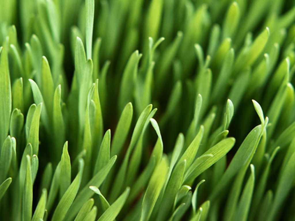 Download 3d Desktop Wallpapers For Windows Xp Beautiful Green Grass Wallpapers Wallpaper Hd