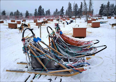 Dog Sleds at Sky High Wilderness Ranch, Whitehorse YK