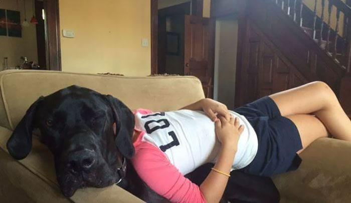 12. Rare species of Great Dane with a human body