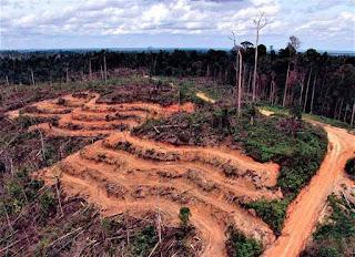 SIEJ : UU Cipta Kerja Lemahkan Perlindungan Lingkungan Hidup