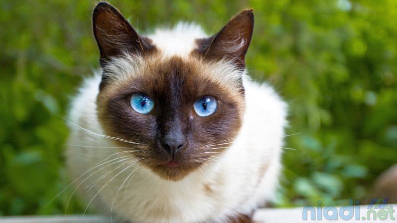 nama kucing islami nabi muhammad rasulullah