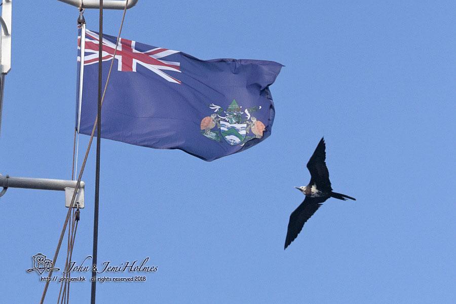John's Hong Kong Birding: Atlantic Odyssey 2018 - Part 6
