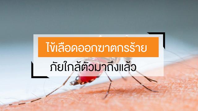 ไข้เลือดออกต้องระวัง อาการไข้เลือดออก ภัยเงียบคร่าชีวิตคนนับร้อยภายในไม่กี่วัน