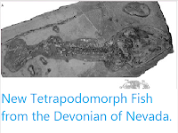 http://sciencythoughts.blogspot.com/2012/03/new-tetrapodomorph-fish-from-devonian.html