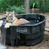 Viral Video: अचानक घर में घुस आया बाघ, बाथटब में कूद-कूदकर नहाया