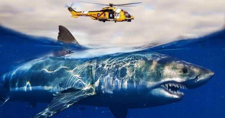 Megalodon köpek balığı zannedilen başka bir canlı, Guadalupe Adası'nın etrafında görülmüştü.
