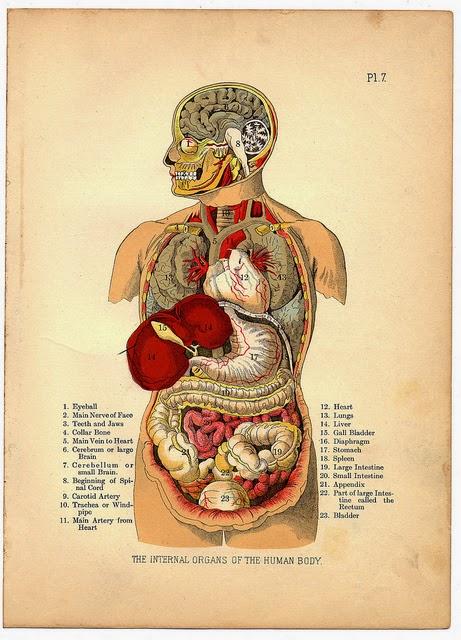 sistem organ tubuh