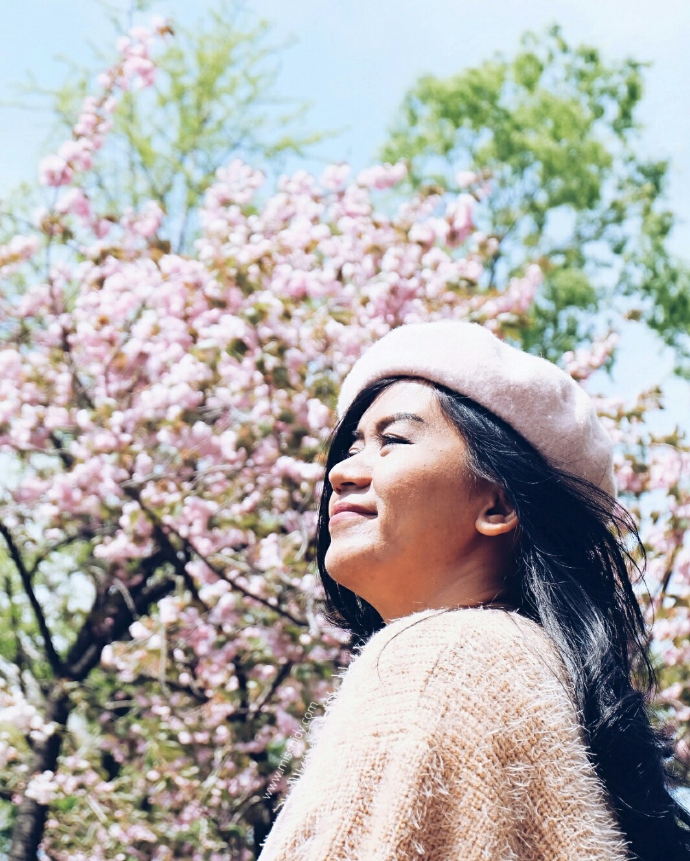 sakura di ueno park