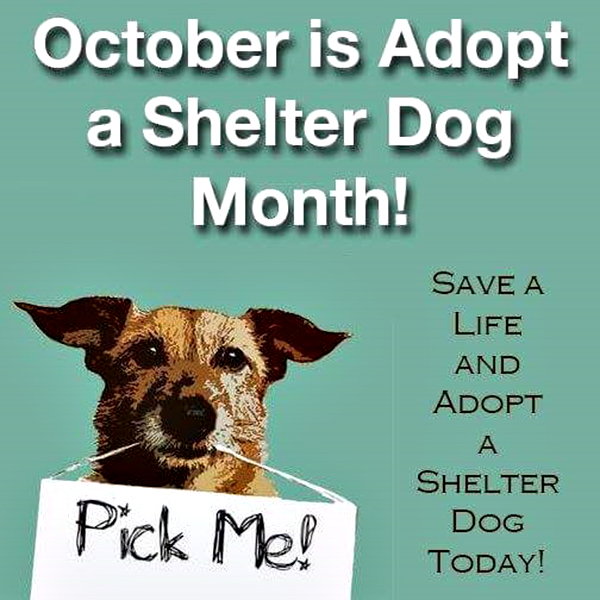Save Our Shelter Dogs Rescue