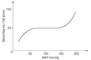 Cerebral blood flow graph