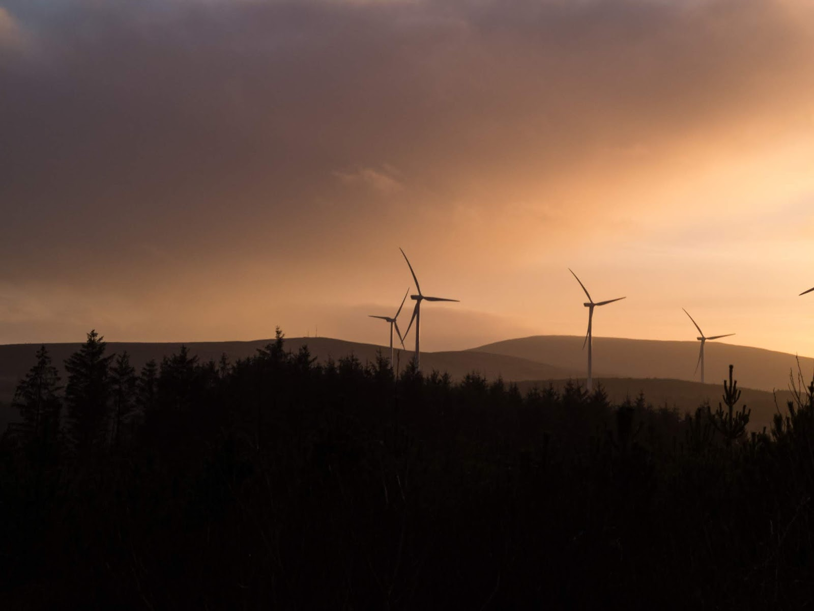 Sunset in the Boggeragh Mountains with conifers and wind turbines.