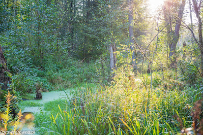 Mokradła w Zaborowie Leśnym