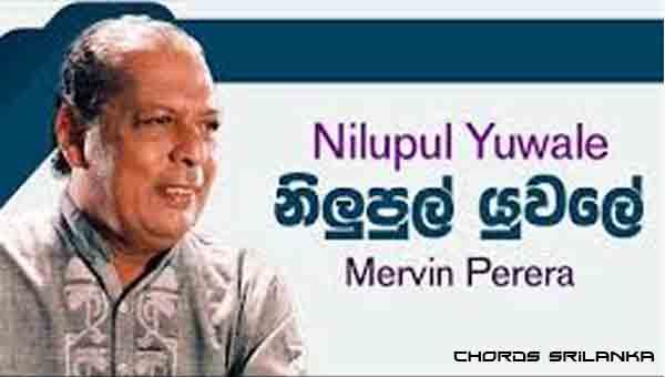 Nilupul Yuwale chords, Mervin Perera chords, Nilupul Yuwale song chords, Mervin Perera song chords,