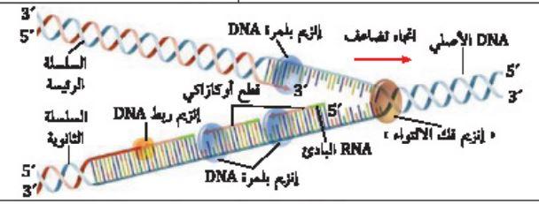 تضاعف DNA شبه المحافظ