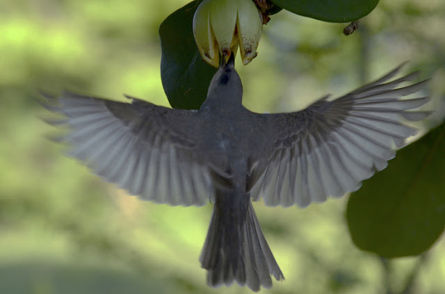 Birds maintain rare plant species, study finds
