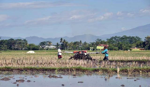 Pertanian di Lumajang