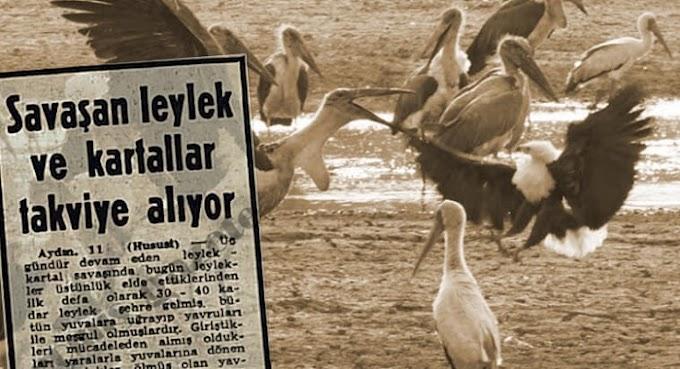 Türkiye'de Leyleklerle Kartalların Savaşı: Birleşenler Kazanır
