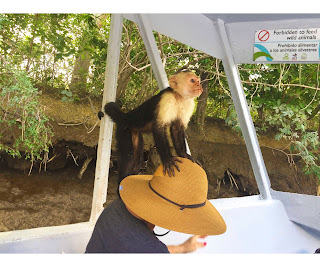 Palo verde Costa Rica Wild life tour