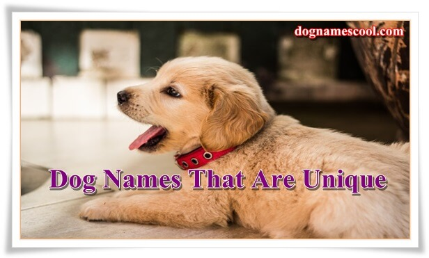 male dog names that are unique