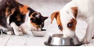 Вибір медичного страхування тварин
