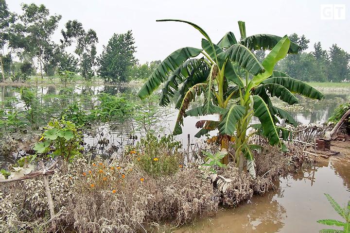 flood-in-ganga