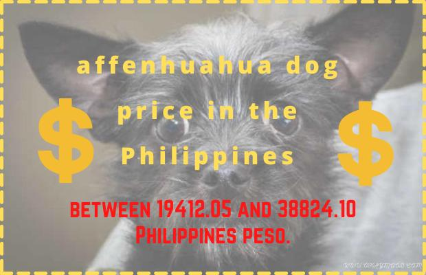 How much affenhuahua dog price in the Philippines?