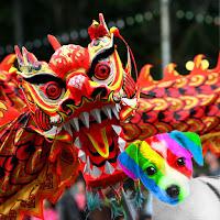 El perro arcoíris sonríe en Cice fotografiado con un dragón chino