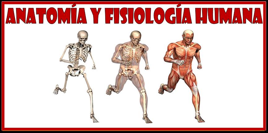 Anatomía y Fisiología humanas ~ Optifutura