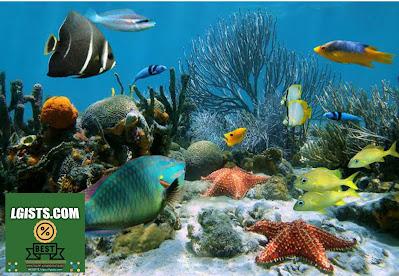 Whats is aquatic animals