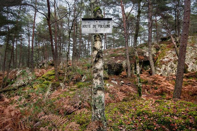 Route du Polygone, Forêt de Fontainebleau.