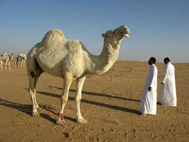 صور خلفيات مدن السعودية ، خلفيات سعوديه روعه جدا hd