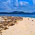 Ocean Warriors Plastic in Paradise