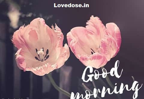 Beautiful Good Morning Images Quotes & Wishes